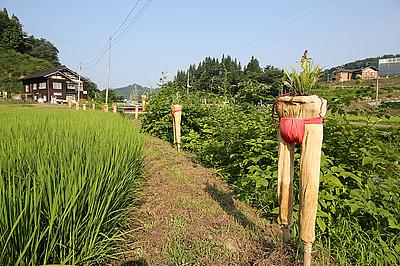 Echigo-Tsumari Triennale 2015