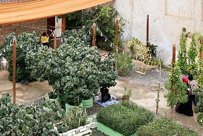 Jardín urbano SAF