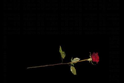 Virtuelle Rose