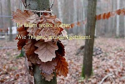 Und wieder färben sich die Blätter