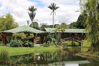 Jardín Botánico: Obras in-situ