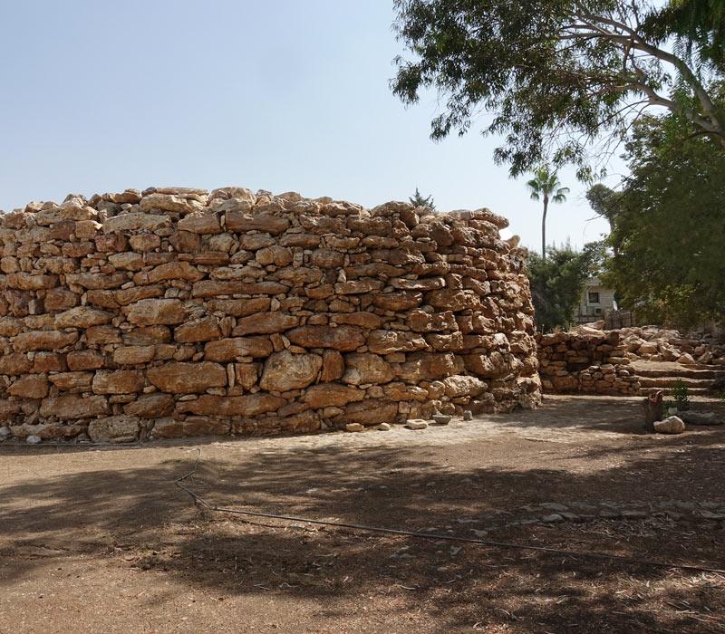 Torre amonita