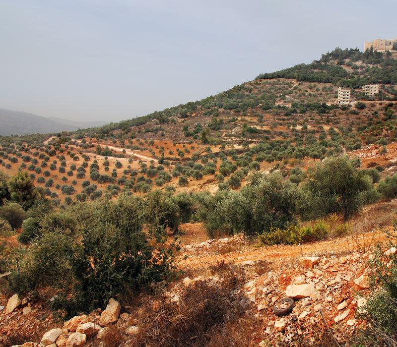 Ajloun Tour